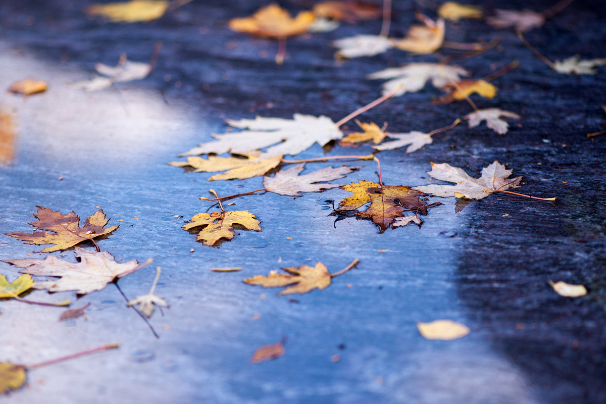 November with fallen leaves